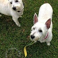 Adopt A Pet :: Belle & Bernie - Ponte Vedra Beach, FL