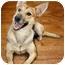 Photo 1 - German Shepherd Dog/Greyhound Mix Dog for adoption in Marina del Rey, California - Muffin