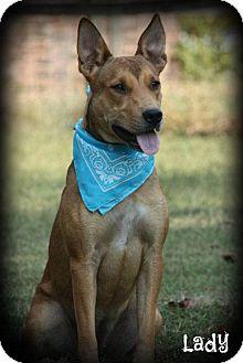 German Shepherd Dog Mix Dog for adoption in Cranford, New Jersey - Lady