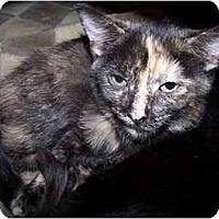 Adopt A Pet :: Ella - Sheboygan, WI