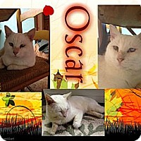 Adopt A Pet :: Oscar - Washington, DC