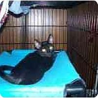 Adopt A Pet :: Kung Fu - Grand Rapids, MI