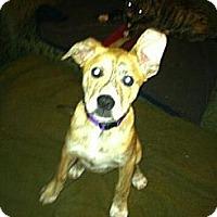 Adopt A Pet :: Delilah - Minneapolis, MN