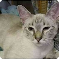 Adopt A Pet :: Micheo - New Port Richey, FL