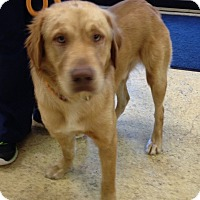 Adopt A Pet :: Frankie - New Canaan, CT