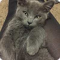 Adopt A Pet :: Dusty - Chandler, AZ