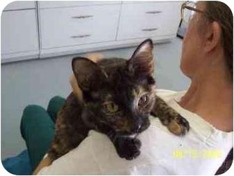 Domestic Shorthair Cat for adoption in Alden, Iowa - Tillie