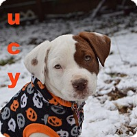 Adopt A Pet :: LUCY - CHICAGO, IL