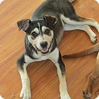 Adopt A Pet :: Mingtu - Franklin, VA