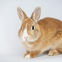 Adopt A Pet :: Firecracker - Los Angeles, CA