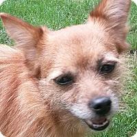 Adopt A Pet :: Sheba Jones - Lexington, KY