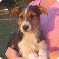 Adopt A Pet :: Renee - Salem, NH