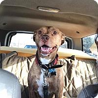 Adopt A Pet :: Rain - Emmett, MI