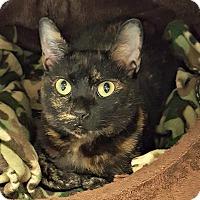 Adopt A Pet :: Darby - Chesapeake, VA