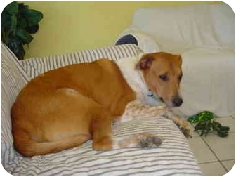 Collie/Retriever (Unknown Type) Mix Dog for adoption in Sugar Land, Texas - Hutch - ADOPTED!