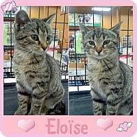 Adopt A Pet :: Eloise - Jeffersonville, IN