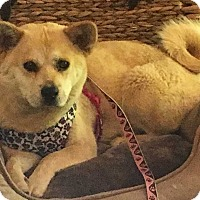 Adopt A Pet :: Mia - Mount Mourne, NC