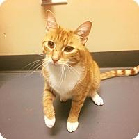 Adopt A Pet :: Zamboni - Chicago, IL