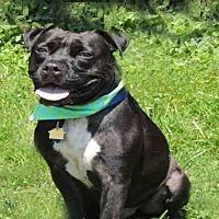 Adopt A Pet :: RAOUL DUKE - Westminster, MD