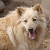 Adopt A Pet :: curly - Wichita, KS