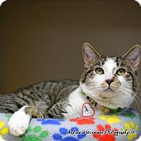 Adopt A Pet :: Hugo - East Hartford, CT