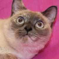 Adopt A Pet :: Ms Blue - Dodgeville, WI