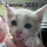 Adopt A Pet :: Lannie - Manassas, VA