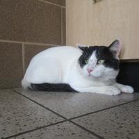 Adopt A Pet :: Lou - Wausau, WI