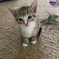 Adopt A Pet :: Luna - Turnersville, NJ