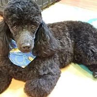 Adopt A Pet :: Harly - Salem, NH