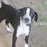 Adopt A Pet :: Finley - Rocky Mount, NC