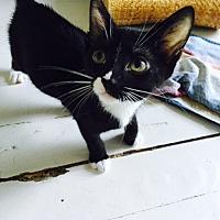 Adopt A Pet :: Minnow - Brooklyn, NY