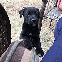 Adopt A Pet :: Rizzo - Regina, SK