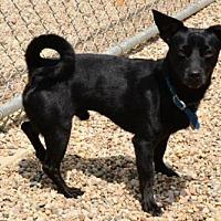 Adopt A Pet :: Cherokee - Lacon, IL