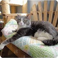 Adopt A Pet :: BK - Kingston, WA