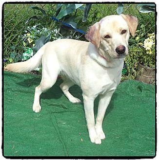 Labrador Retriever Mix Dog for adoption in Marietta, Georgia - ROSALINA