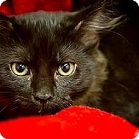 Adopt A Pet :: Bruno - Bulverde, TX
