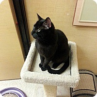 Adopt A Pet :: Monkey - West Dundee, IL