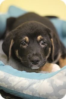 Hound (Unknown Type) Mix Puppy for adoption in Waldorf, Maryland - Bubbles