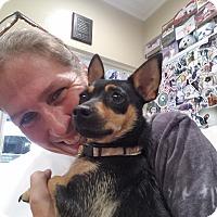 Adopt A Pet :: Lana - Gilbert, AZ