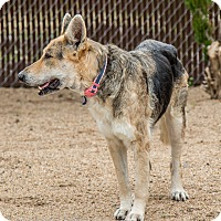 Adopt A Pet :: Betty White - Phoenix, AZ