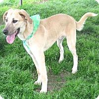 Adopt A Pet :: ROSCOE - Pilot Point, TX