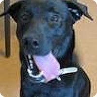 Adopt A Pet :: Penny - Petaluma, CA