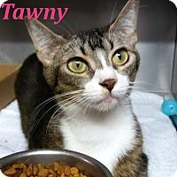 Adopt A Pet :: Tawny - El Cajon, CA