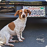 Adopt A Pet :: SPOT - Inland Empire, CA