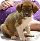 Beagle Mix Puppy for adoption in Foster, Rhode Island - Stanley