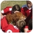 Photo 2 - Golden Retriever Dog for adoption in Roanoke, Virginia - Sam