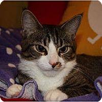 Adopt A Pet :: Rosie (LE) - Little Falls, NJ