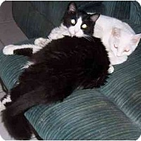 Adopt A Pet :: Socks & Mrs. White - Simms, TX