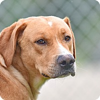 Adopt A Pet :: Fred and Wilma - New Canaan, CT
